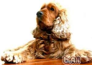 为什么狗不能吃太咸的食物-成犬饲养